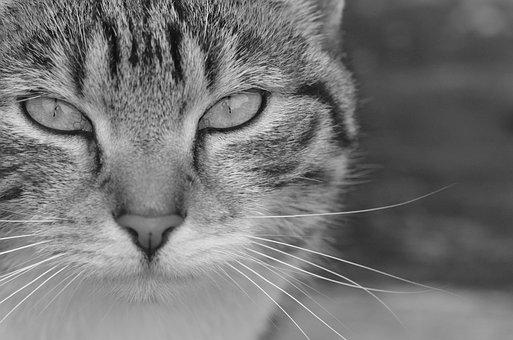 Cat, Photograph, Animal, Pet, Feline, Portrait