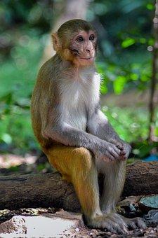 Monkey, Wildlife, Nature, Wild, Animal, Forest, Zoo