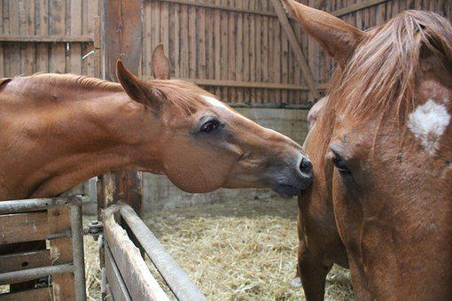 Horses, Love, Friendship
