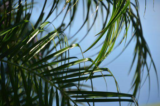 Palm, Nature, Tree, Holiday