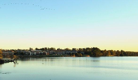 Kingwood, Morning, Houston, Landscape, Texas, Nature