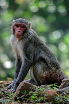 Monkey, Animal, Wildlife, Jungle, Wild, Nature, Zoo