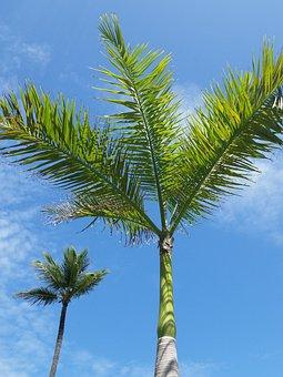 Flower, Punta Cana, Tropical, Resort, Seascape, Ocean