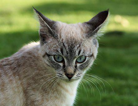 Cat, Eye, Domestic Cat, Kitten, Mieze, Adidas