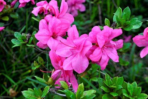 Flower, Purple, Purple Flower, Floral, Nature, Spring