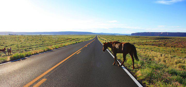 Road, Crossing, Horse, Usa, Nevada