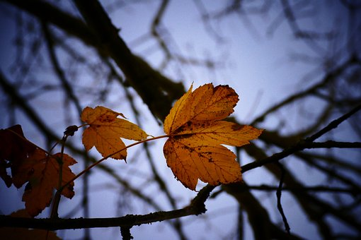Tree, Fall, Nature, Outdoors, Leaf, Season, Branch