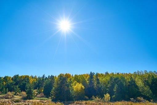 Autumn, Forest, Yellow, Nature, Beautiful, Landscape