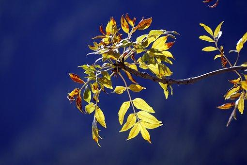Leaves, Yellow, Autumn, Nature, Tree, Golden Autumn
