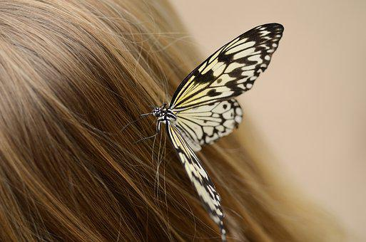 Butterfly, Hair, Sitting, Woman, Girl, Young