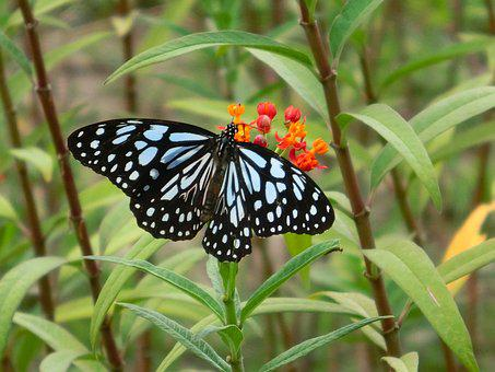 Butterfly, Adopt Honey, Beautiful Port, Pattern, Taiwan