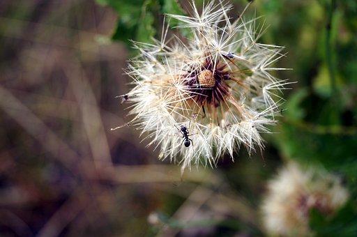 Flower, Bee, Wild Flower, Blossom, Bloom, Spring, Plant