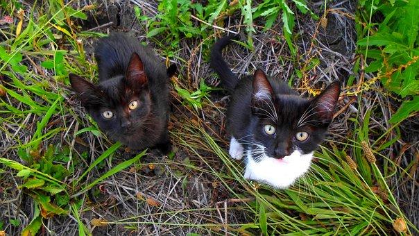 Kitten, Cat, Pets, Pet, Nature, Friendly, Tabby, Calm