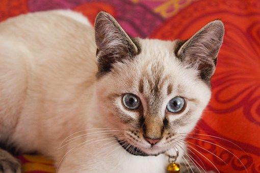 Cat, Feline, Cute, Fluffy, Young, Domestic, Fur, Kitty