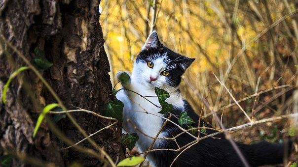 Cat Portrait, Cat, Domestic Cat, Cat's Eyes, Kitten