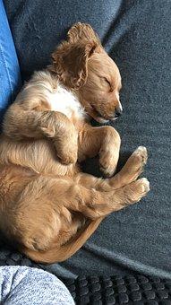 Dog, Animal, Cute, Mammal, Puppy, Pet, Young
