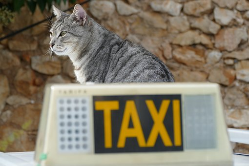 Cat, Care, Pet, Mammal, Fauna, Taxi, Car