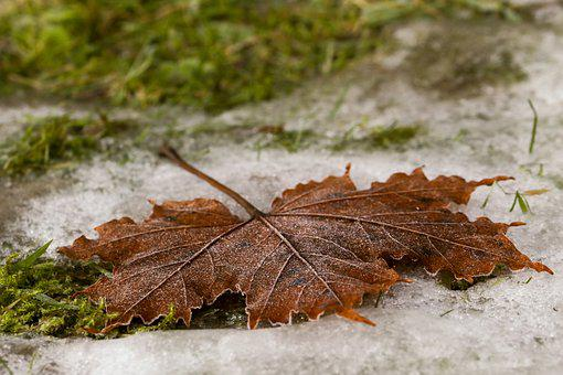 Leaf, Autumn, Fall, Frost, Nature