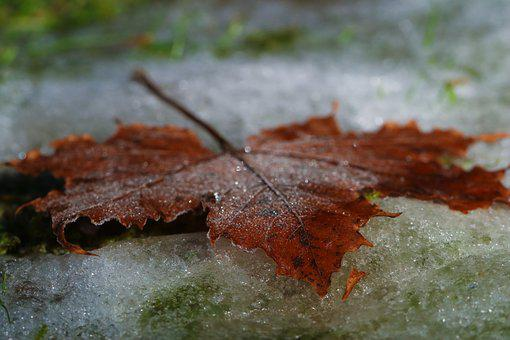 Leaf, Autumn, Frost, Fall, Nature