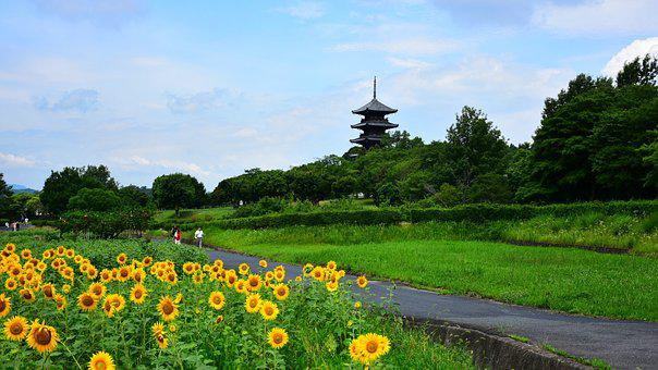 Sunflower, Five Story Pagoda, Natural