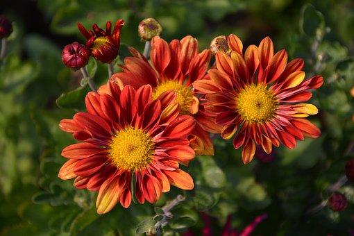 Flower, Chichewa Live, Vivid Color, Flowers, Plant