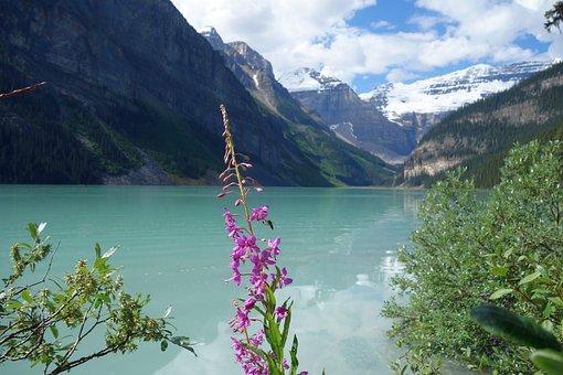 Lake, Plant, Bank, Mountains, Canada, Nature, Water