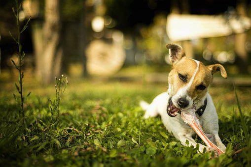 Dog, Animal, Nature, Animals, Dogs, Grass, Background