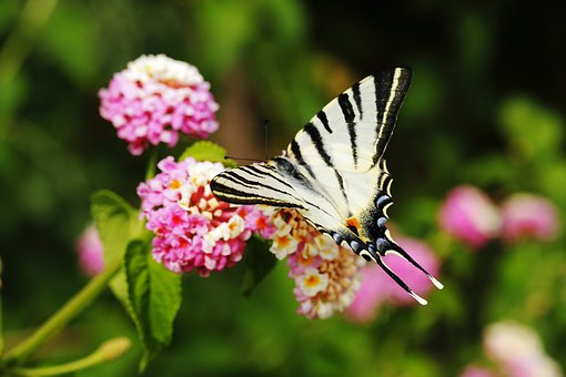 Butterfly, Animal, Wing, Fly, Beautiful, Flowers