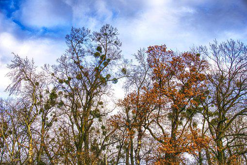 Trees, Canopy, Clouds, Mood, Nest, Bird's Nest, Hdr