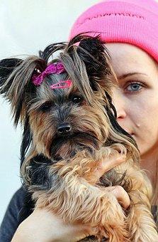 Yorkie, Blonde Woman, Love, Friendship, Dog, Eye