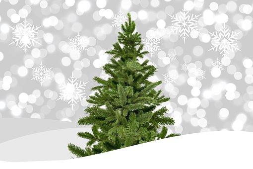 Christmas, Christmas Tree, Bokeh, Winter