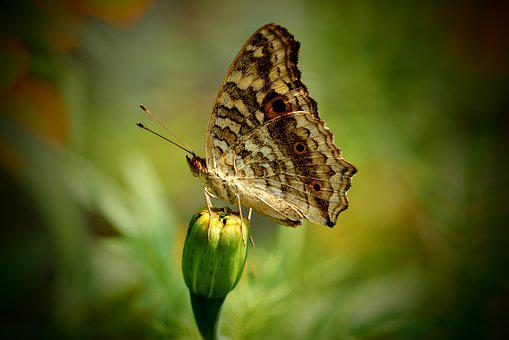 Butterfly, Love, Nature