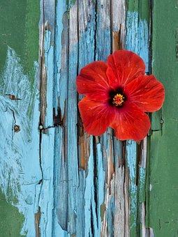 Natural Flowers, Colors, Flower, Garden, Plant