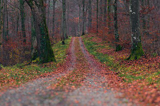 Autumn, Forest, Away, Autumn Forest, Leaves, Nature