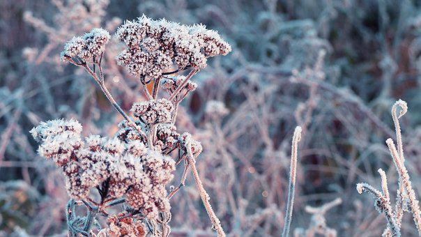 Winter, Frost, Branch, Cold, Ice, Frozen, Plant, Nature