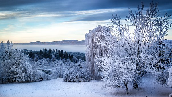 Winter, Landscape, Frost, Winter Cold