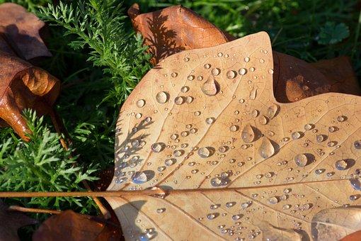 Raindrops, Rain, Drops, Leave, Leaves, Fall, Texture