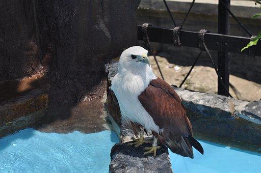 Manila Ocean Park, Eagle, Standing