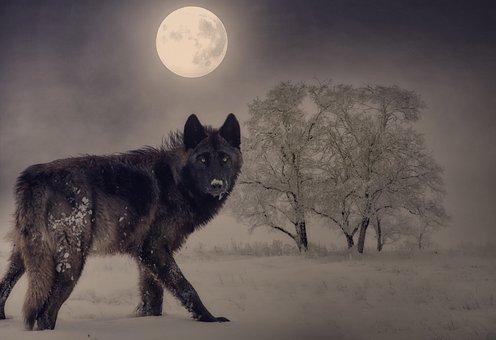 Wolf, Moon, Winter, Full Moon, Night, Tree, Mood