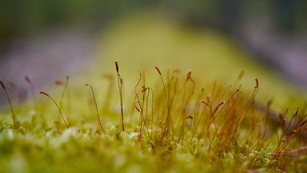 Moss, Tree, Plants, Vegetation, Green, Lichen, Nature
