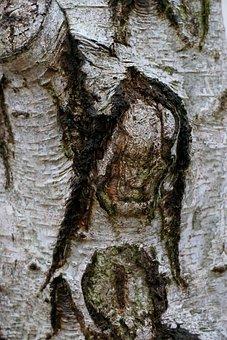Tree, Bark, Log, Nature, Structure, Birch
