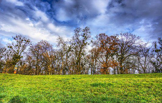 Trees, Canopy, Meadow, Green, Clouds, Drama, Mood, Nest