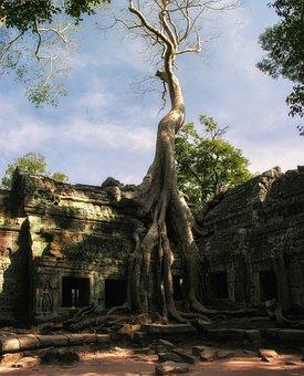 Cambodia, Prom, Ta Prom, Temple, Angkor, Angkor Wat