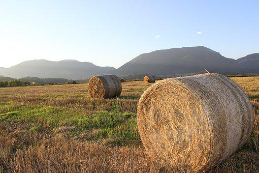 Ssas Straw, The Stack Of Straw, Straw, Field, Hay