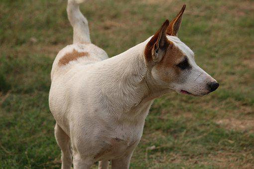 Dog, Canine, Stare, Pet, Animal, Puppy, Cute, White