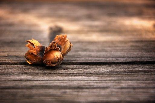 Hazelnut, Cinderella, Hazelnuts, Nut, Food, Tasty, Nuts