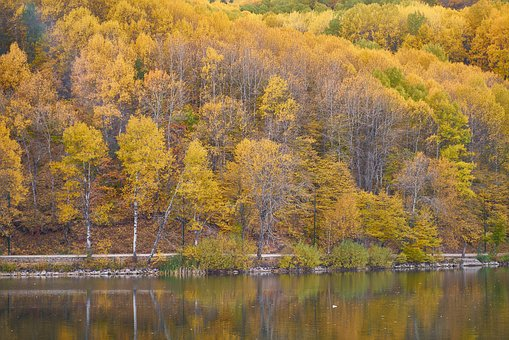 Autumn, Trees, Lake, Autumn Flowers, The Leaves Are