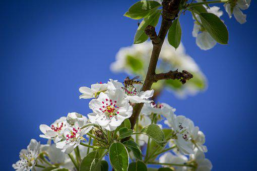 Hover Fly, Flowers, Tree, Nature, Insect, Animal, Fly
