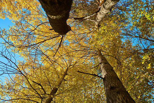 Autumn, The Leaves Are, Trees, Nature, Dry Leaves