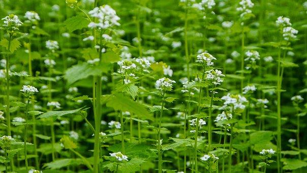 Flowers, Flower, White, Forest, Green, The Stem, Leaf